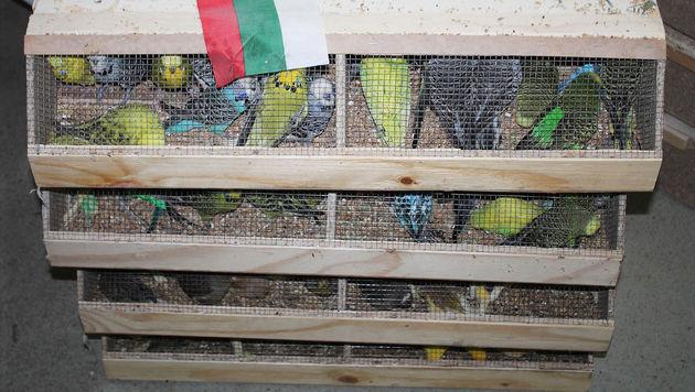 1200 Ziervögel in Pkw gepfercht - gerettet (Bild: APA/WTV)