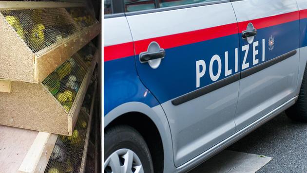 1200 Ziervögel in Pkw gepfercht - gerettet (Bild: APA/LPD Wien, Andreas Graf)
