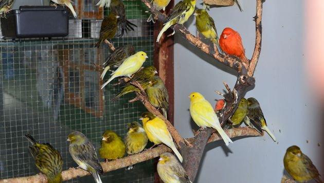 Die Ziervögel wurden vom WTV freigekauft und müssen daher nicht zurück in den Transport. (Bild: WTV/Hermann Hofer)