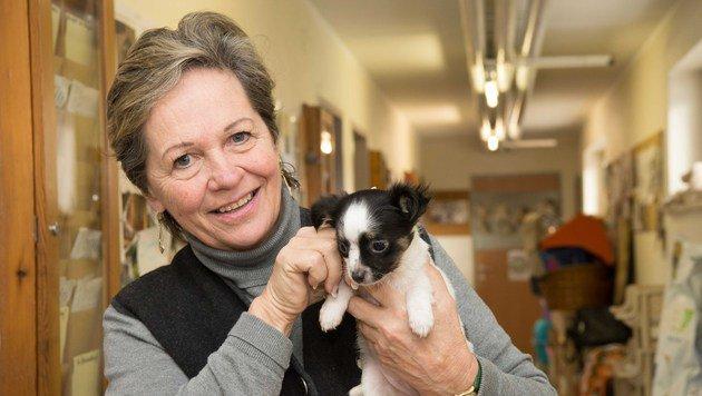 Inge Eberstaller mit den geretteten kleinen Hunden, die nun im Tierheim Linz gesund gepflegt werden. (Bild: Werner Kerschbaummayr, fotokerschi.at)