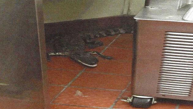 Der Alligator landete unverletzt im Restaurant. (Bild: AP)