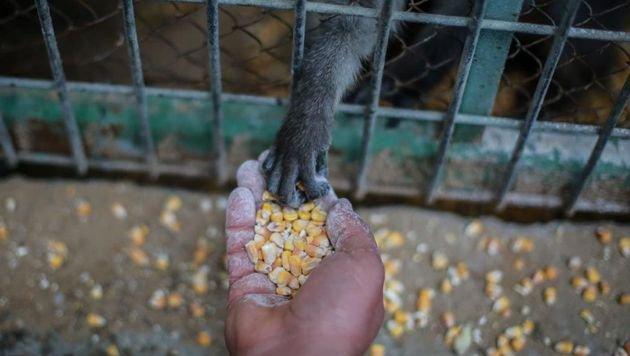 """""""Vier Pfoten"""" helfen hungernden Tieren in Gaza (Bild: Vier Pfoten)"""