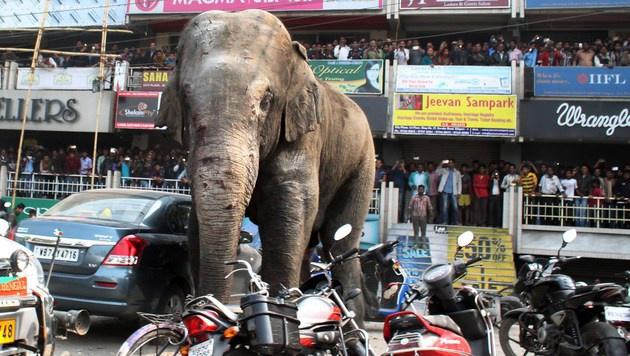 Fünf Menschen von Elefanten totgetrampelt (Bild: APA/AFP/DIPTENDU DUTTA)