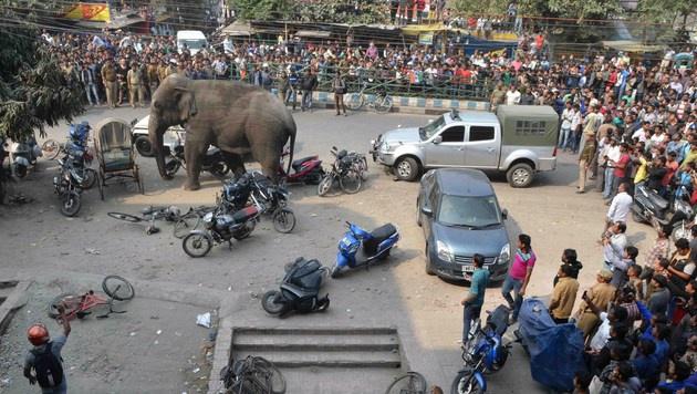 Dieser Elefant zerstörte Dutzende Häuser (Bild: APA/AFP/DIPTENDU DUTTA)