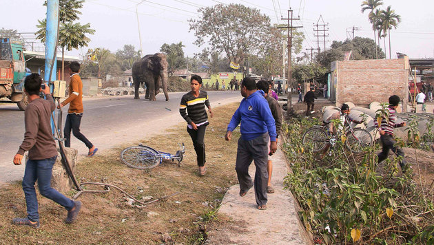Dieser Elefant zerstörte Dutzende Häuser (Bild: AP)