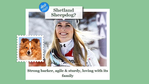 Lindsey Vonn ist agil und robust, lieb zur Familie, aber auch ein starker Kläffer. (Bild: what-dog.net)
