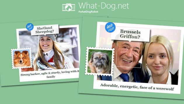Microsoft verrät, welcher Hund in Ihnen steckt (Bild: What-Dog.net, krone.at-Grafik)