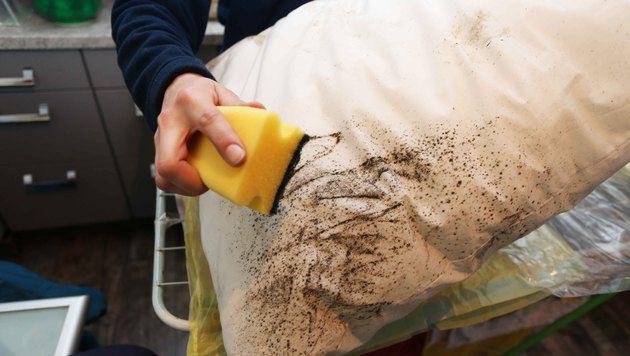 Wohnung verschimmelt: Handwerker will jetzt helfen (Bild: Reinhard Judt)