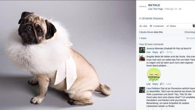 Auf Facebook überschlagen sich die Reaktionen auf den Pelz für Hunde, wie dieser Screenshot zeigt. (Bild: Screenshot facebook.com/mathild00)