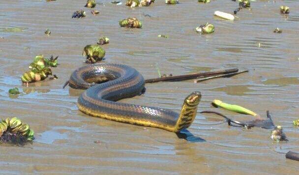 Unkrautteppich, Schlangen - leicht ist es für die Segler vor Buenos Aires nicht! (Bild: Vadlau)