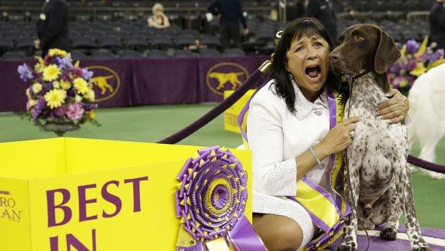 Jagdhund gewann bei Westminster-Hundeshow (Bild: Associated Press)