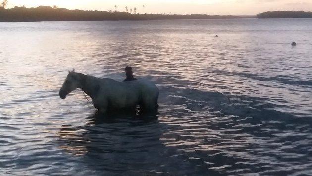 Hier werden sogar Pferde im Meer gewaschen. (Bild: Max Rogers)