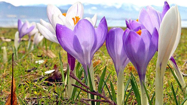 Der Frühling liegt schon in der Luft (Bild: dpa/dpaweb/dpa/A3542 Karl-Josef Hildenbrand)