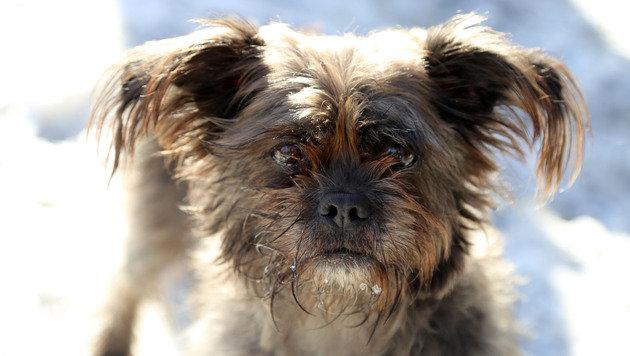 """Hund """"Maddie"""" rettet ihr Herrchen (58) vor Flammen (Bild: Evelyn Hronek)"""