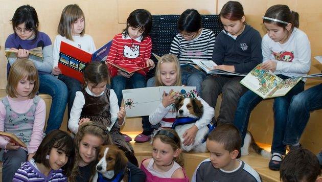 """Verein """"Tiere als Therapie"""" hilft Flüchtlingen (Bild: TaT)"""