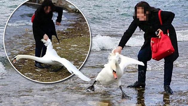 Touristin zieht Schwan für Selfie aus See (Bild: macedoniaonline.eu)