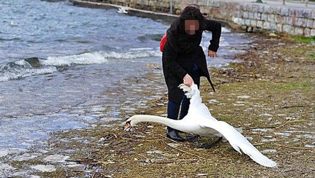 Touristin zieht Schwan für Selfie aus See (Bild: Nake Batev)