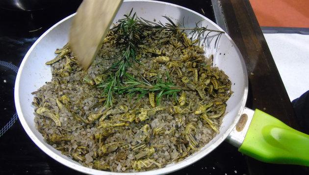 Heuschrecken, Mehlwürmer und Co. werden frisch zubereitet. (Bild: Christian Spitzer)