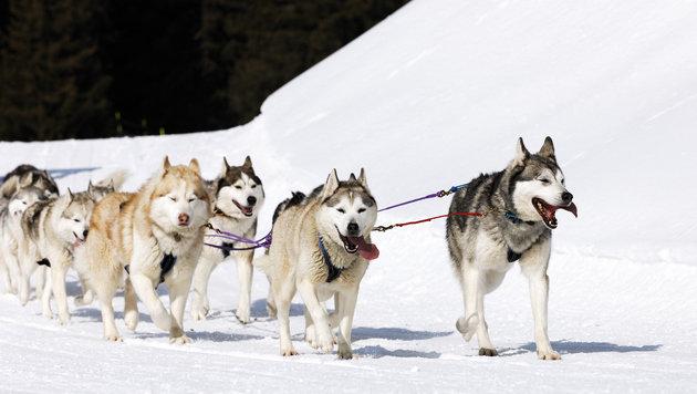Schneemobil tötete Hund bei Schlitten-Rennen (Bild: thinkstockphotos.de (Symbolbild))