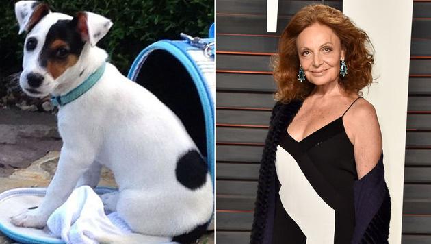 Diane von Furstenberg ließ ihren Hund klonen. (Bild: instagram.com/dvf, APA/AFP/GETTY IMAGES/PASCAL LE SEGRETAIN)