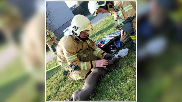 Die Hündin wurde von den Feuerwehrmännern erstversorgt. (Bild: BFW Linz)