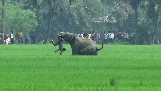 Fünf Menschen von Elefanten totgetrampelt (Bild: APA/AFP)