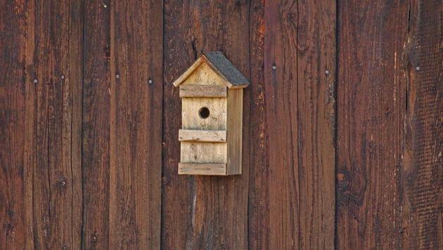 Jetzt Nistkästen für bedrohte Vogelarten aufhängen (Bild: Pfotenhilfe)