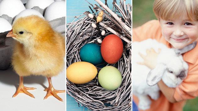 So feiern Sie ein tierschutzkonformes Osterfest (Bild: thinkstockphotos.de)