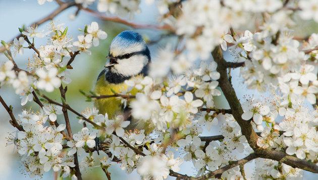 Frühlingswetter: Föhn bringt milde Temperaturen (Bild: APA/dpa/Julian Stratenschulte)