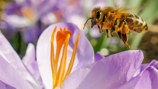 Mädchen und Buben als Imker im Jahr der Biene (Bild: APA/dpa/Armin Weigel)