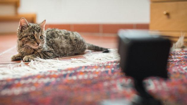 mit felix entdecken was katzen daheim machen jetzt bewerben tierecke. Black Bedroom Furniture Sets. Home Design Ideas