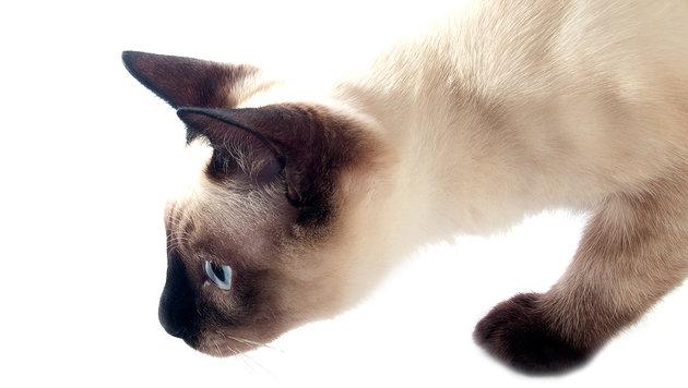 Verschickte Katze überlebte acht Tage in Paket (Bild: thinkstockphotos.de)