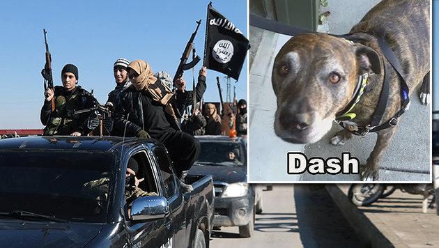"Pitbull ""Dash"" löste in den USA Terroralarm aus (Bild: AP, KTVU)"