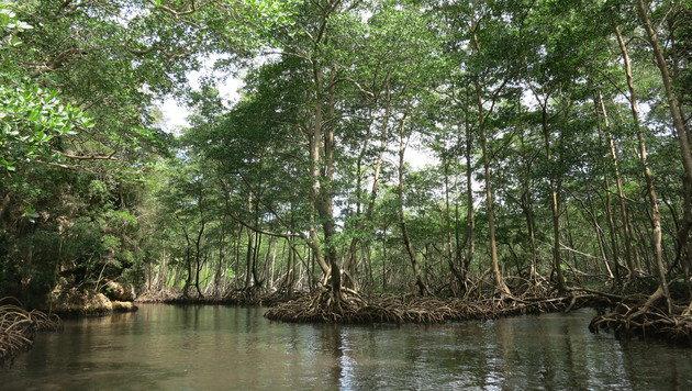 In die Natur der Dominikanischen Republik kann man unter anderem per Boot eintauchen. (Bild: dez)