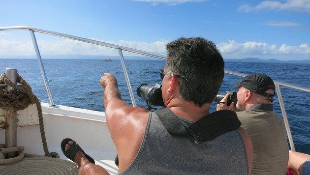 Walbeobachtung ist für viele Touristen ein unvergessliches Erlebnis. (Bild: dez)