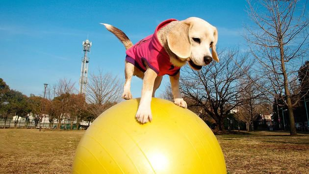 """Purin"" in Action! (Bild: APA/AFP/Guinness World Records/HANDOUT)"