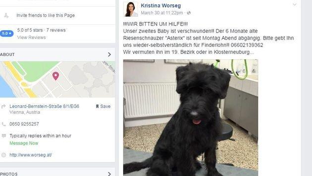 Auch auf Facebook suchen die Worsegs nach ihrem Hund. (Bild: Screenshot facebook.com)