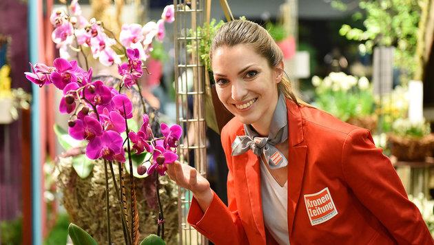 """Orchideen gehören natürlich dazu, wenn die """"Krone"""" zum """"Blühenden Österreich"""" nach Wels lädt. (Bild: Markus Wenzel)"""