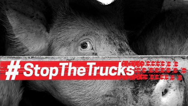 114 Millionen Tiere werden jährlich transportiert (Bild: Jack Tummers)