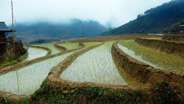 Auf terrassenförmigen Reisfeldern wird in Vietnam noch traditionell angebaut. (Bild: Hanna Molden/Simon Niggli)