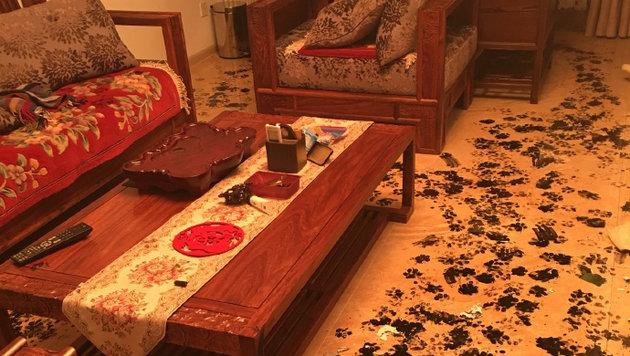 Hund verwüstete Haus mit Kalligrafie-Tinte (Bild: imgur.com/ForeverGratefulinVT)