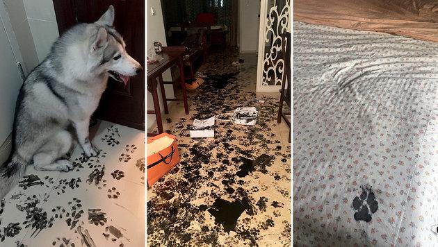 Hund verwüstete Haus mit Kalligrafie-Tinte (Bild: imgur.com/ ForeverGratefulinVT)