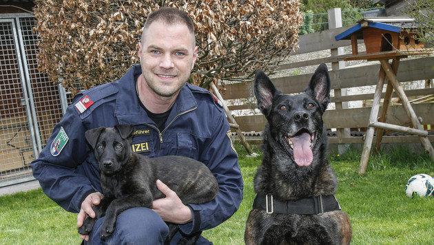 """Welpe """"Ares"""" wird wie """"Ruby"""" die Spezialausbildung zum Suchtgift-Hund machen. (Bild: Markus Tschepp)"""