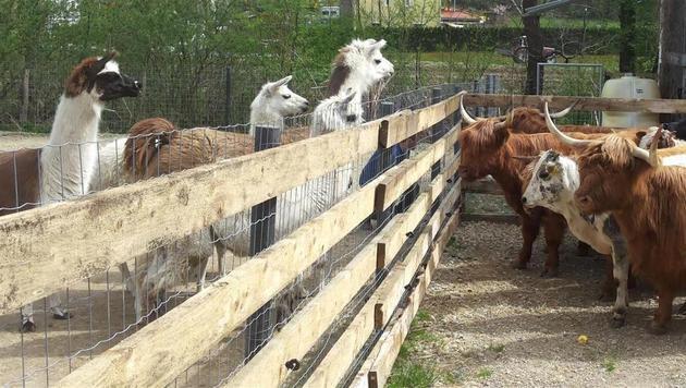 Die neuen Nachbarn werden neugierig beäugt. (Bild: Purzel & Vicky)