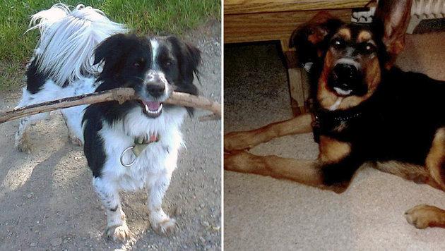 Hunde erschossen: Jäger im Visier der Ermittler (Bild: zVg)
