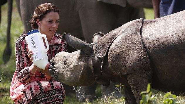 Auch ein Nashorn bekommt Milch von Kate gefüttert. (Bild: AFP or licensors)
