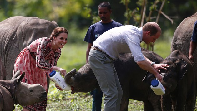 William und Kate füttern Elefantenbabys. (Bild: AFP or licensors)
