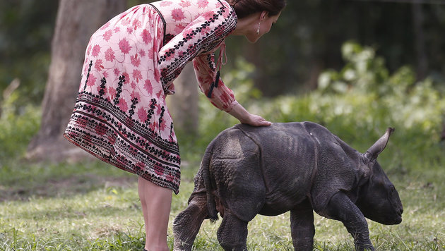 Kate streichelt ein kleines Nashorn. (Bild: AFP or licensors)