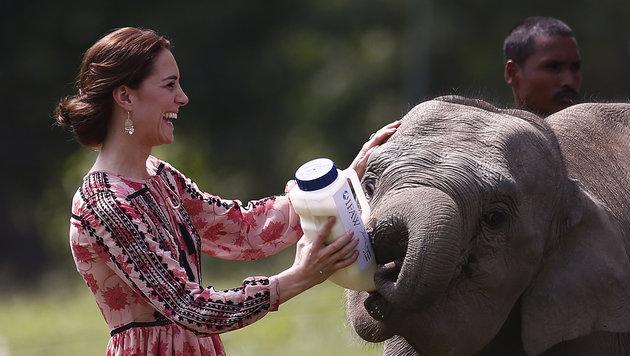 "Kate füttert im ""Centre for Wildlife Rehabilitation and Conservation""in Assam ein Elefantenbaby. (Bild: AFP or licensors)"