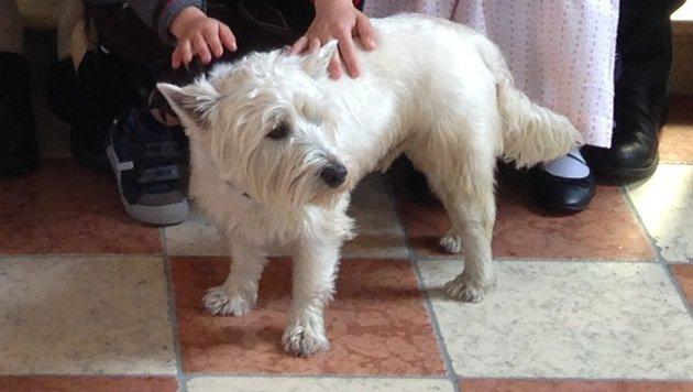 Terrier pfiff auf Pilgerweg und ließ sich taufen (Bild: Guttner)